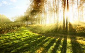 Vi tycker att Huddinge ska vara en föregångskommun när det gäller omställning till miljövänliga alternativ.